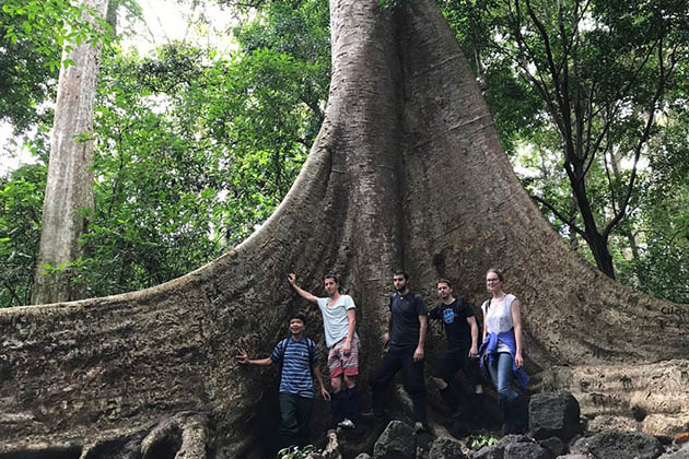 Giant Tung Tree in Cat Tien