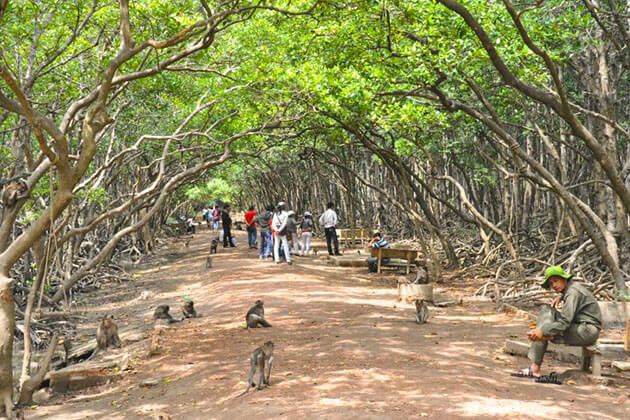 Vam Sat Mangrove Forest Tour from Ho Chi Minh City