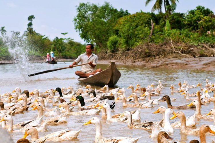 an binh island mekong delta