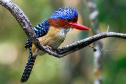 bird at nam cat tien national park