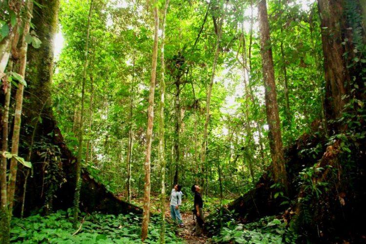 jungle at nam cat tien national park