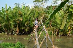 monkey bridge in mekong delta